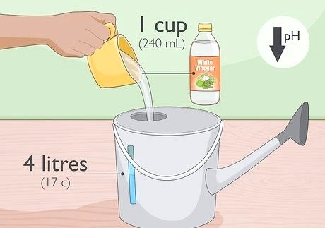 Hvordan hage med eddik